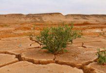 klimawandel-die-erde-stirbt